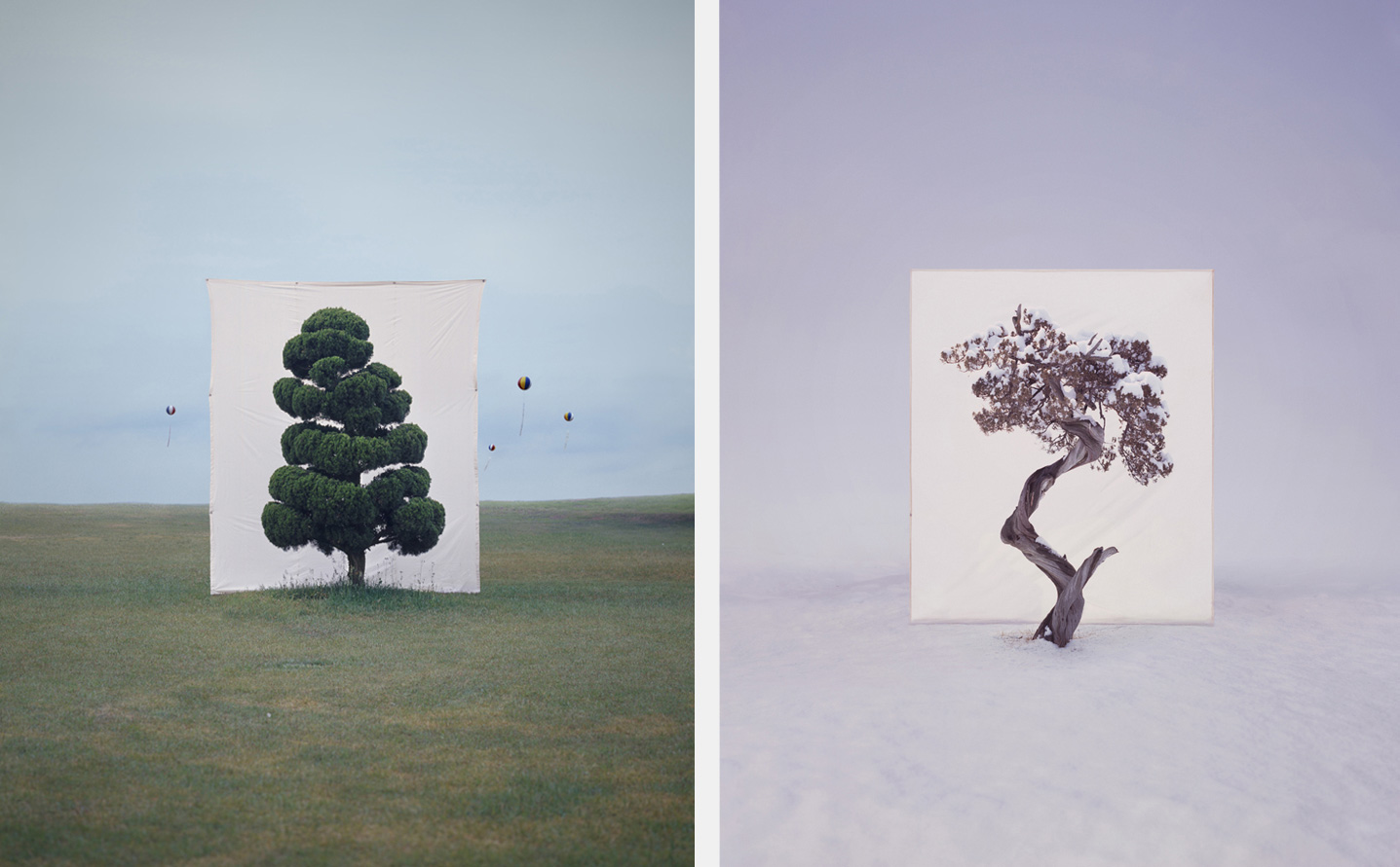 myoung ho lee trees